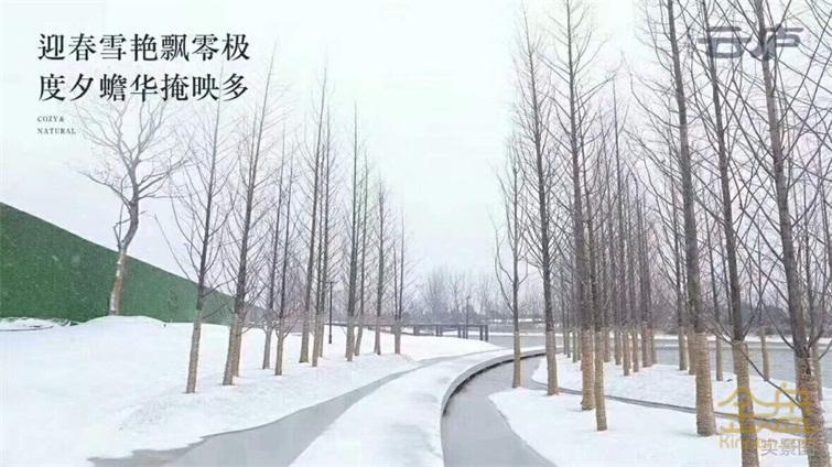 水杉步道.jpg
