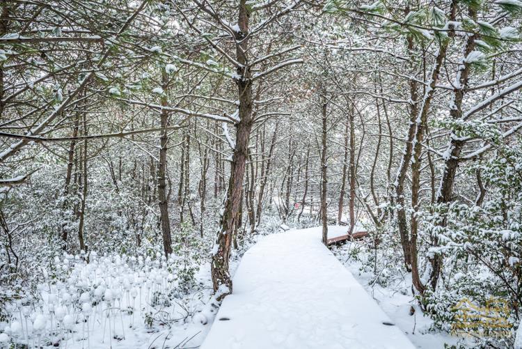 雪景 (1).jpg