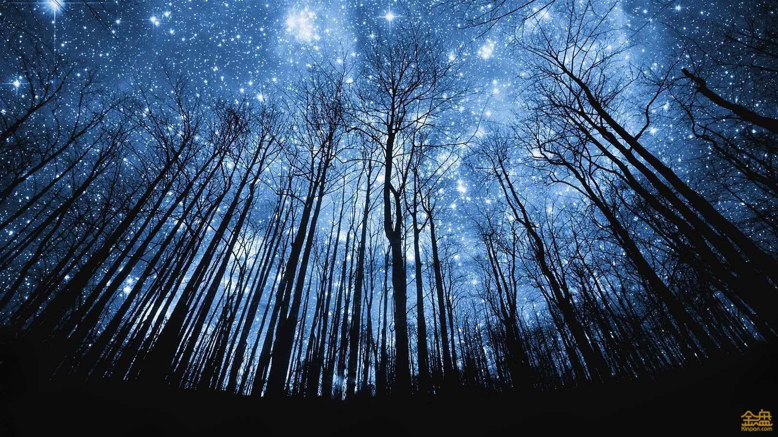 Forest-beautiful-blue-starry-night_1600x900 (1).jpg