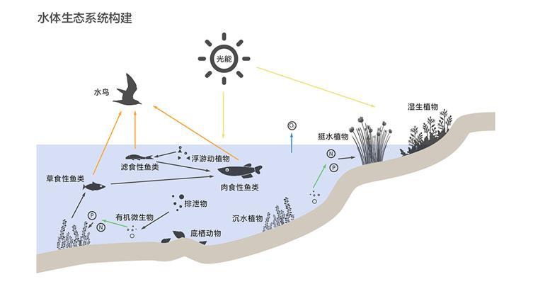 7.水体生态系统构建.jpg