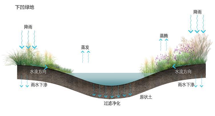 4.海绵设施-下凹绿地.jpg