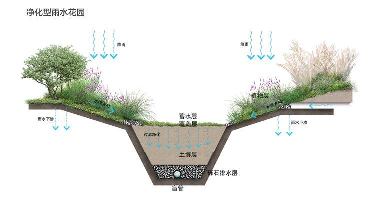 5.海绵设施-净化型雨水花园.jpg